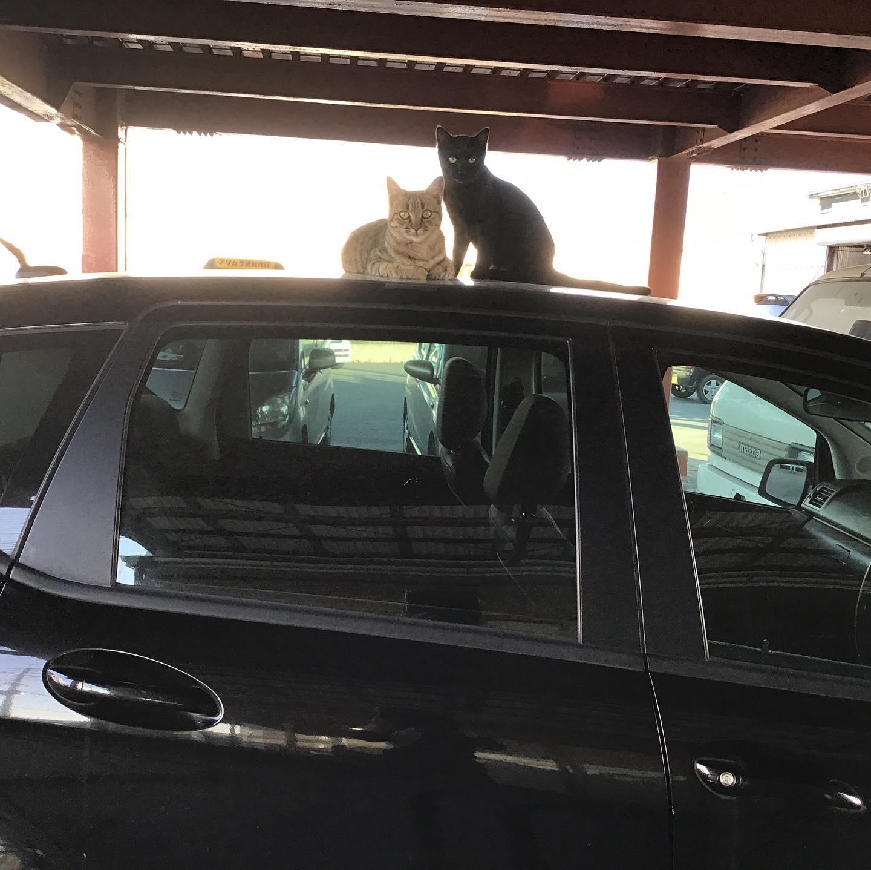 ベンツに乗った猫2匹工場猫のサクラちゃんとサンボくんです。社長のベンツに乗ってご満悦。社長にめちゃ怒られてました。(笑)只今整備主任の中村さんが奮闘中のエンジン。組み上がったら、またいい音させてくれるのでしょうか?楽しみです。